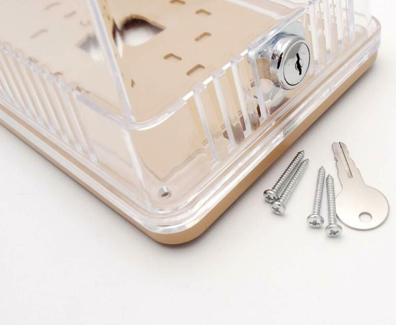 """Clear Plastic - Solid Base x 5.37"""" L"""